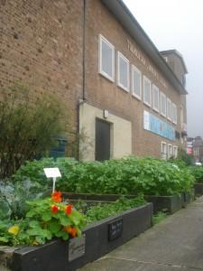 Odlingslådor längs huvudgatan. Foto: Åsa Wisén