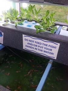 Aquaponicsystemet i Todmorden